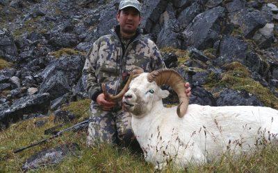 Alaska – Dall Sheep